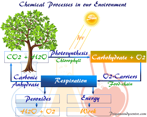 Study Chemistry in Environmental Science and Abiotic, Biotic and Energy Components, Ecosystem Conservation