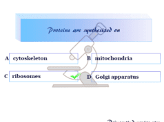 biology quiz-1 online MCQ for school college competitive exams