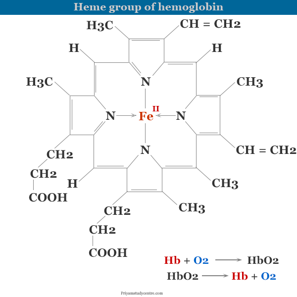 Structure of heme unit or group in hemoglobin and function of red blood cells or RBCs