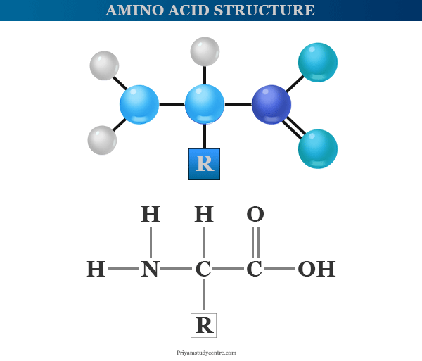 Structure and examples of amino acids that contain amino and carboxyl groups in their side chain
