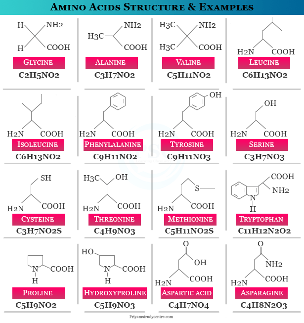 Amino acids structure, examples, names and formula