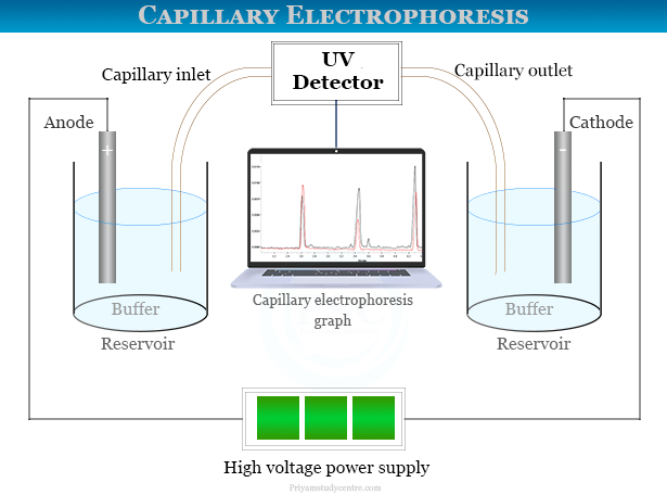 Capillary zone electrophoresis instrument and principle for analysis DNA, mRNA and proteins