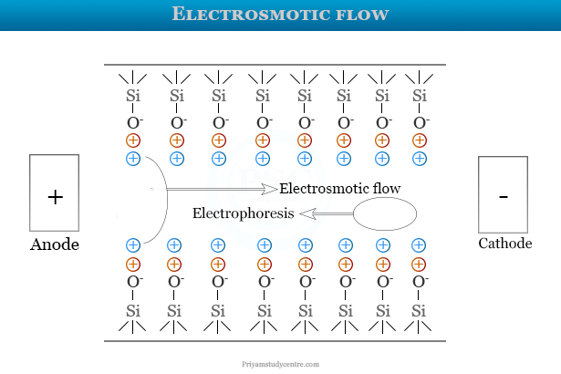 Electroosmotic flow and electrophoresis in fused silica capillaries