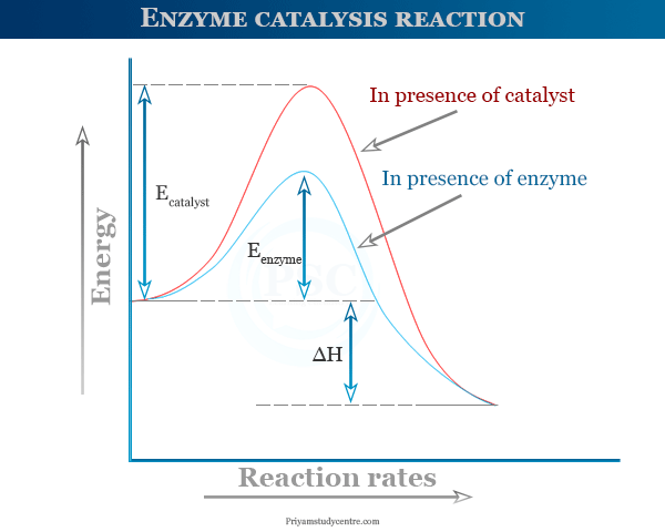 Enzyme catalysis reaction and activation energy diagram