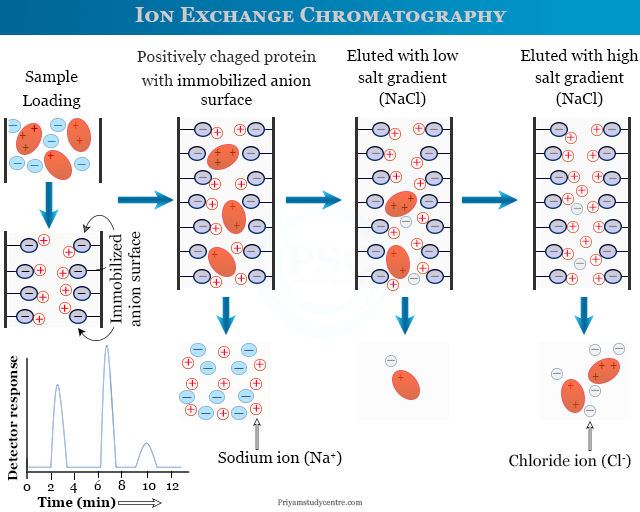 Ion exchange chromatography procedure for purification or separation of protein