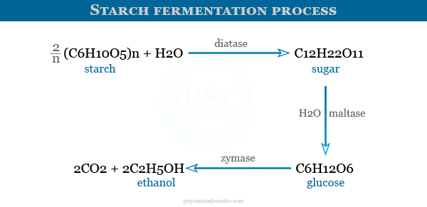 Examples of enzymes on starch fermentation process