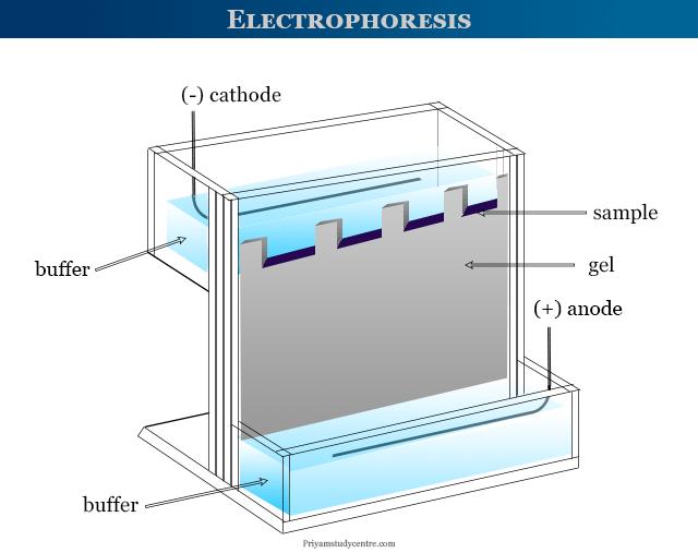 Gel electrophoresis principle and apparatus